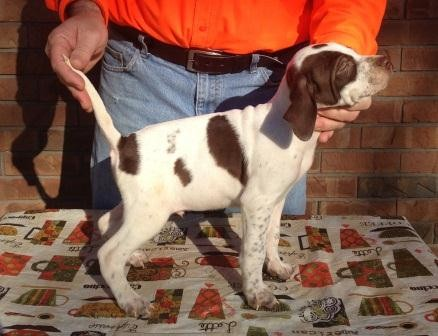 White Oak Kennels - Puppies for Sale